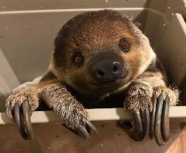 animal magic sloth.jpg